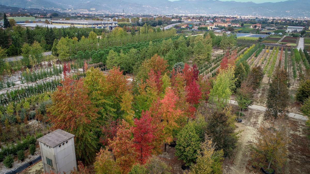 autunno-in-vivaio
